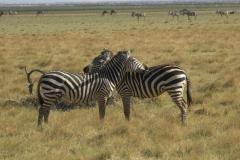 afrika-priroda23